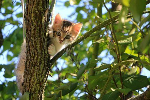 This is a photo of a cat in a tree. She needs a real cat tree!