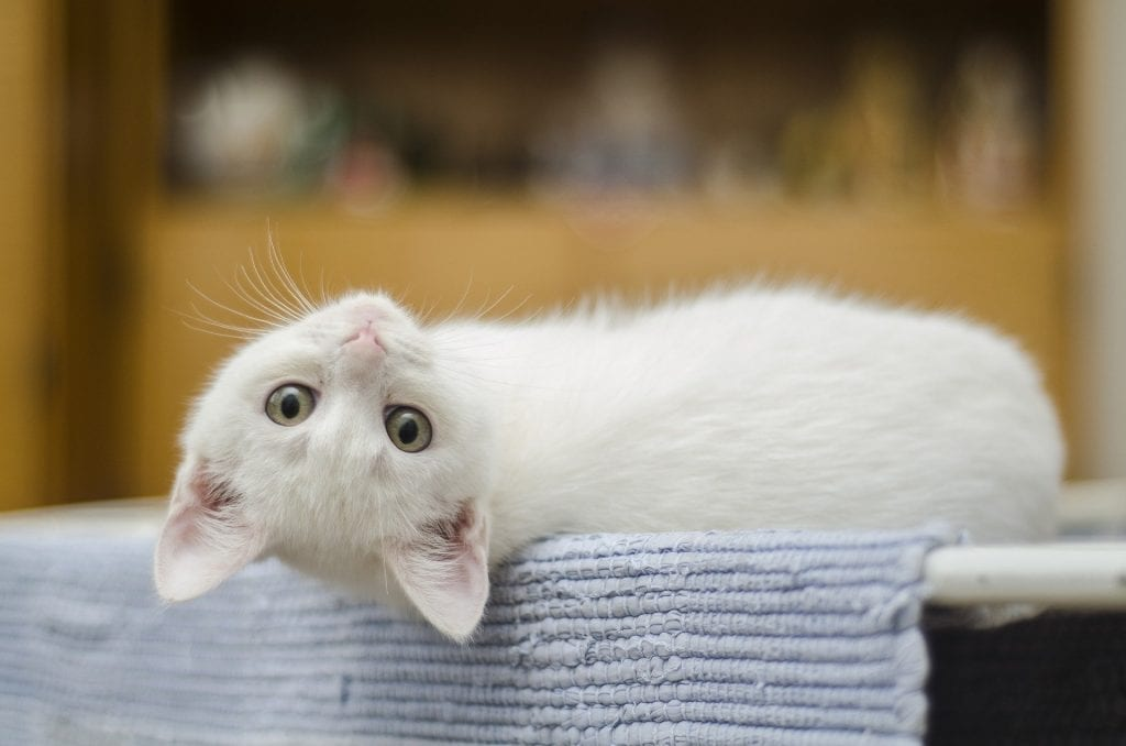 Cute kitty giving you a glance.