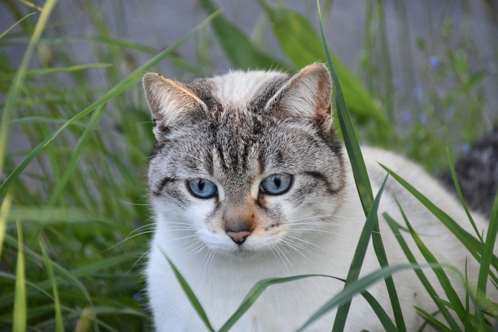 A kitty having a good time standing in some grass