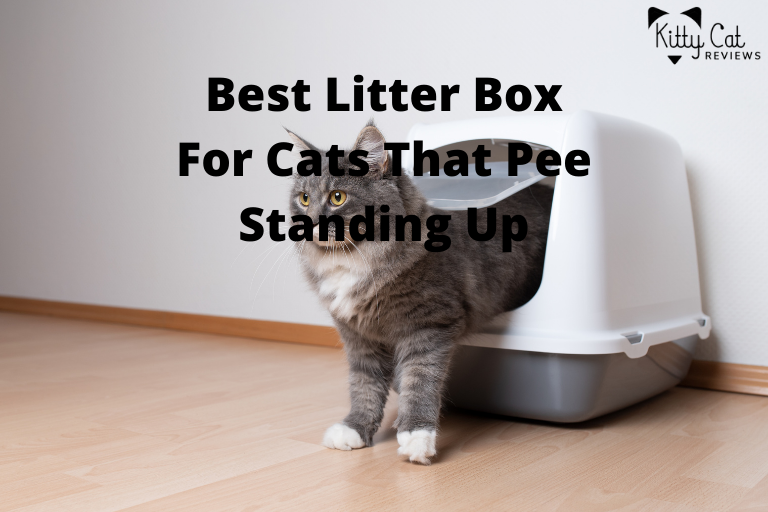 Best Litter Box For Cats That Pee Standing Up