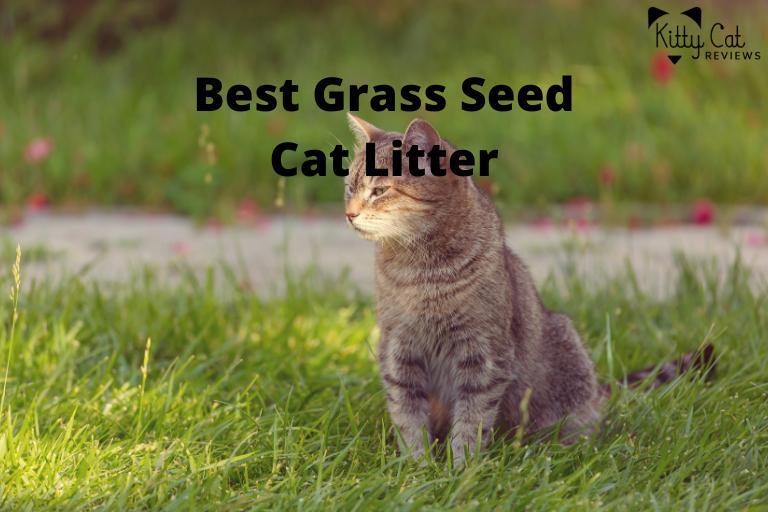 Best Grass Seed Cat Litter