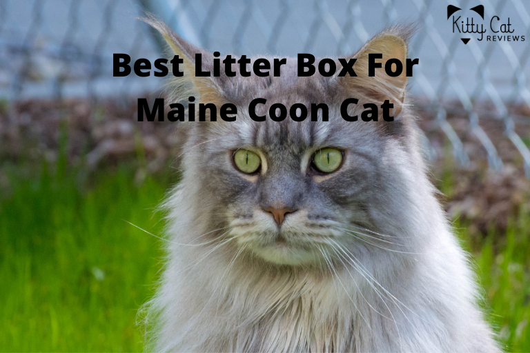 Best Litter Box For Maine Coon Cat