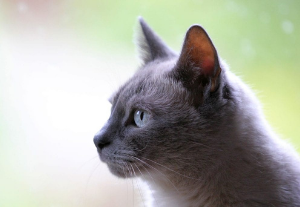 A cat looking into the distance