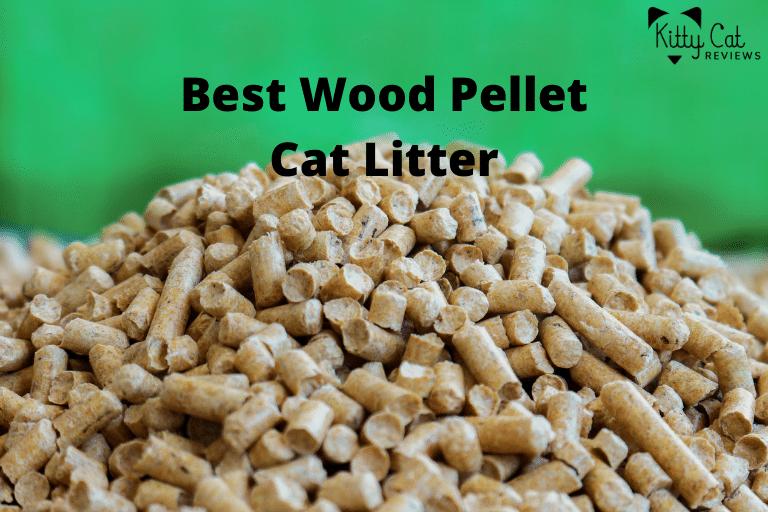 Best Wood Pellet Cat Litter