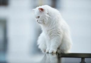 cat on perch