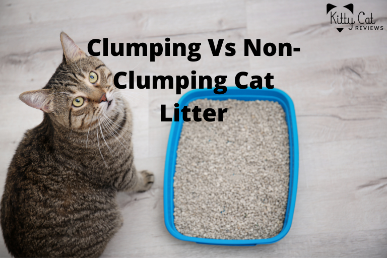 Clumping Vs Non-Clumping Cat Litter