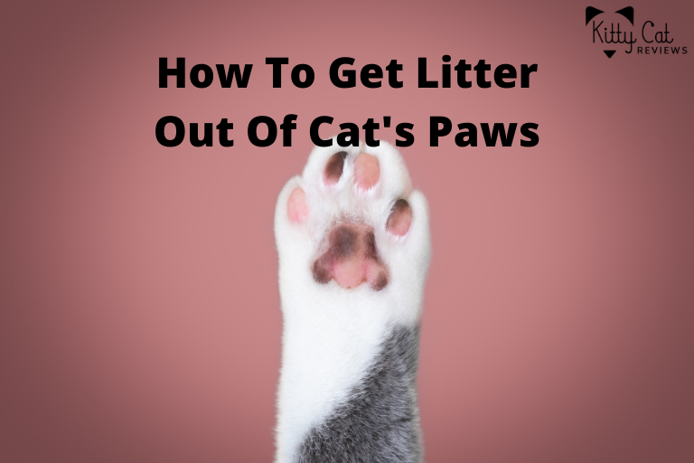 How To Get Litter Out Of Cat's Paws