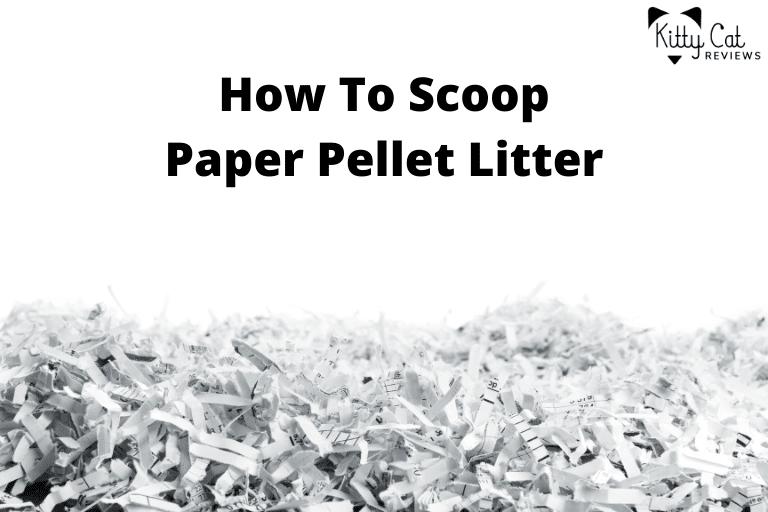How To Scoop Paper Pellet Litter