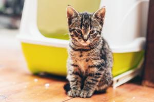 cat sitting outside covered litter box