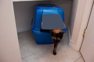 a cat exiting a litter box that is in a closet